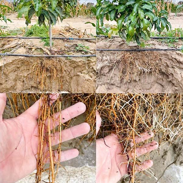 Plantas intervenidas con microorganismos, Bionativa.